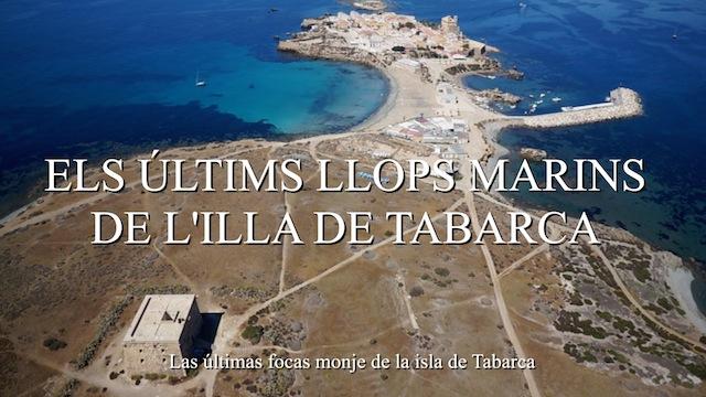 Els últims llops marins de l'illa de Tabarca